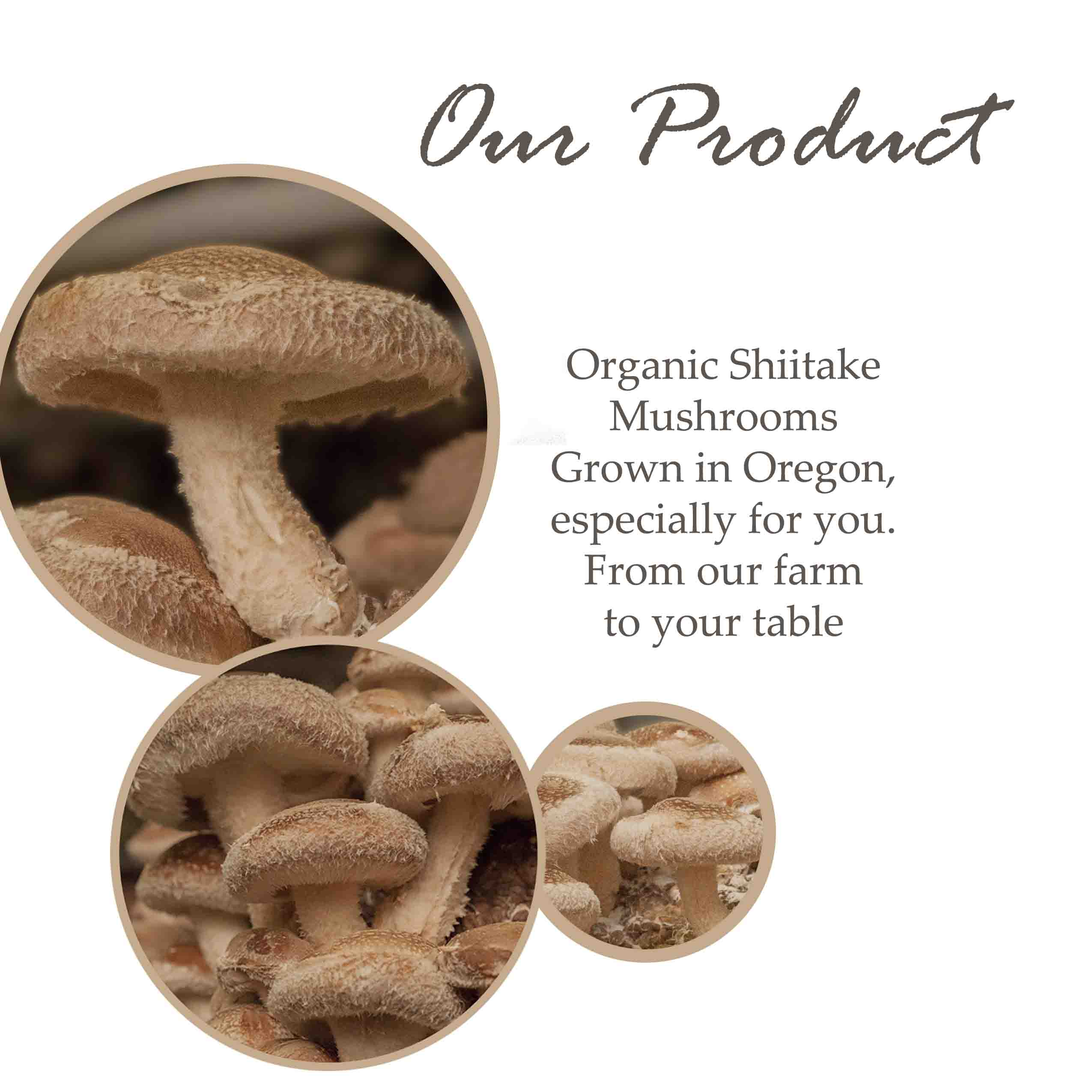 certified organic shiitake mushrooms oregon food safety vegan