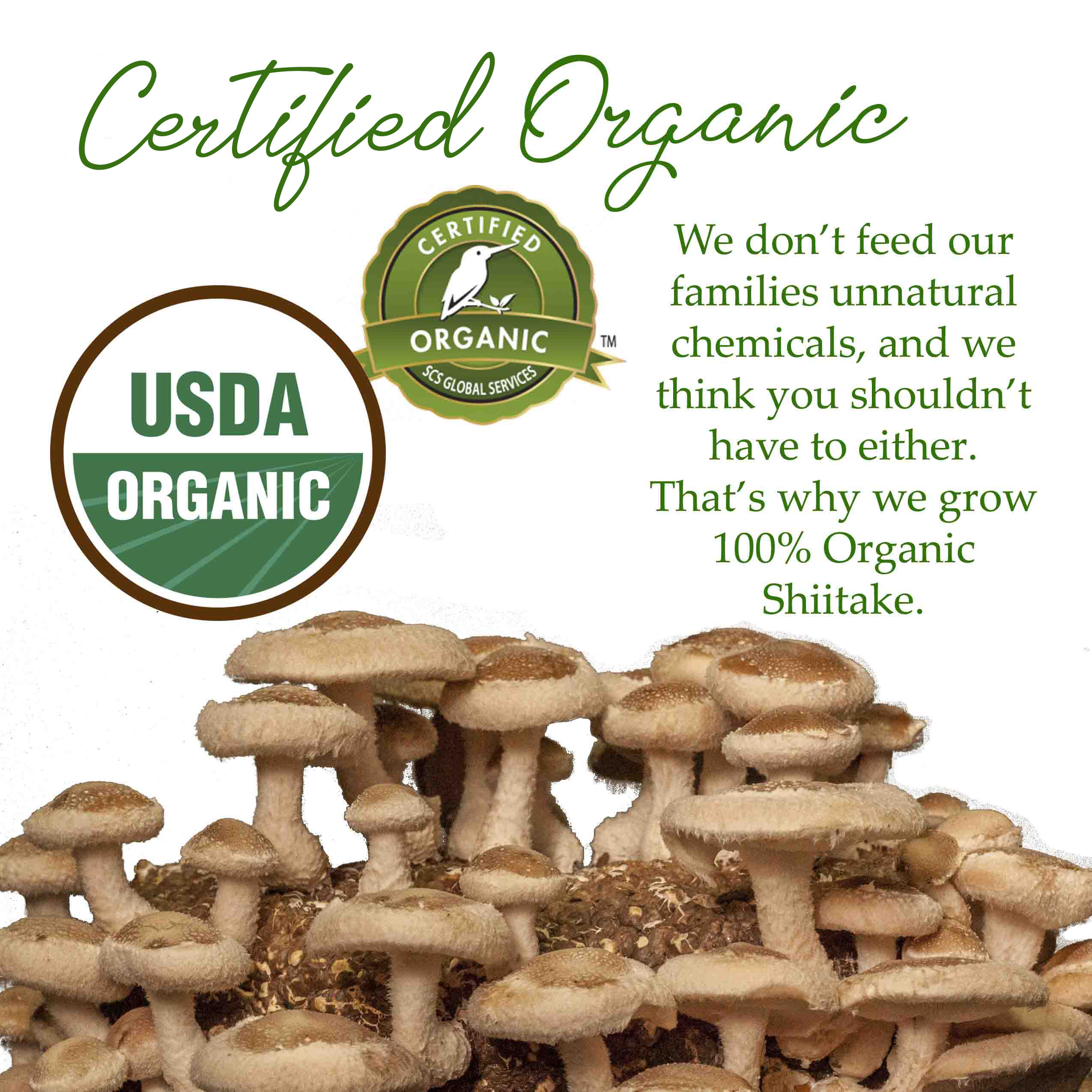 certified organic shiitake mushrooms top hat